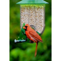Unique Cardinal Feeder