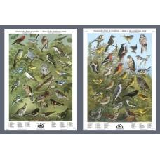 Série II: Oiseaux des forêts de feuillus et de conifères (grandes affiches)