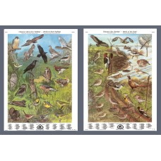 Série III: Oiseaux dans leur habitat et oiseaux des champs (grandes affiches)