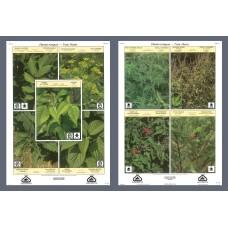 Plantes toxiques (grandes affiches)
