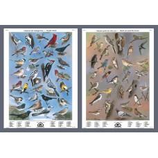 Mini-affiche - Oiseaux de mangeoires et près de chez soi