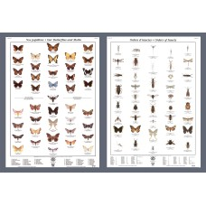 Butterflies and Orders of Insects (Large Poster Set)