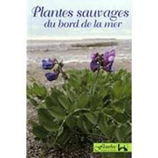Plantes sauvages du bord de la mer