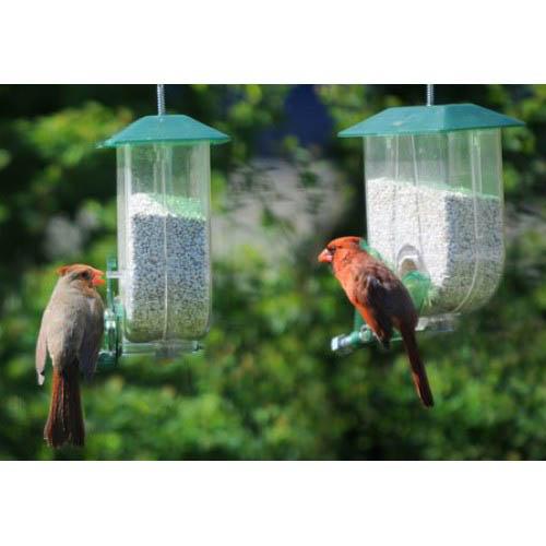 unique mangeoire cardinal unique cardinal feeder. Black Bedroom Furniture Sets. Home Design Ideas