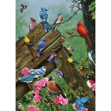 Casse-tête 1000 morceaux - Les oiseaux de la fôret