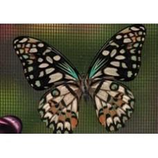 Protège-moustiquaire aimanté - Papillon vert et beige