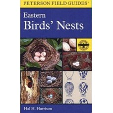 Eastern Birds' Nests